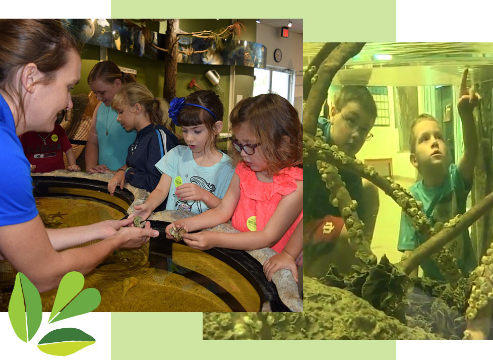 Children Learning about Rookery Bay in our Environmental Learning Center | Rookery Bay Research Reserve