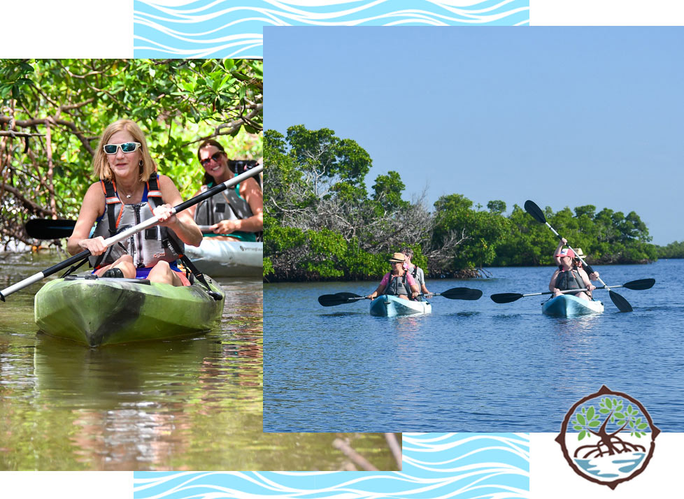 Visitors to Rookery Bay enjoying a guided Kayak Tour | Rookery Bay National Estuarine Research Reserve